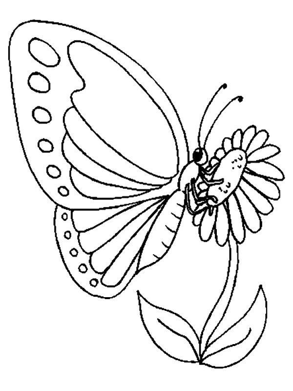 Раскраска бабочки для детей - af25