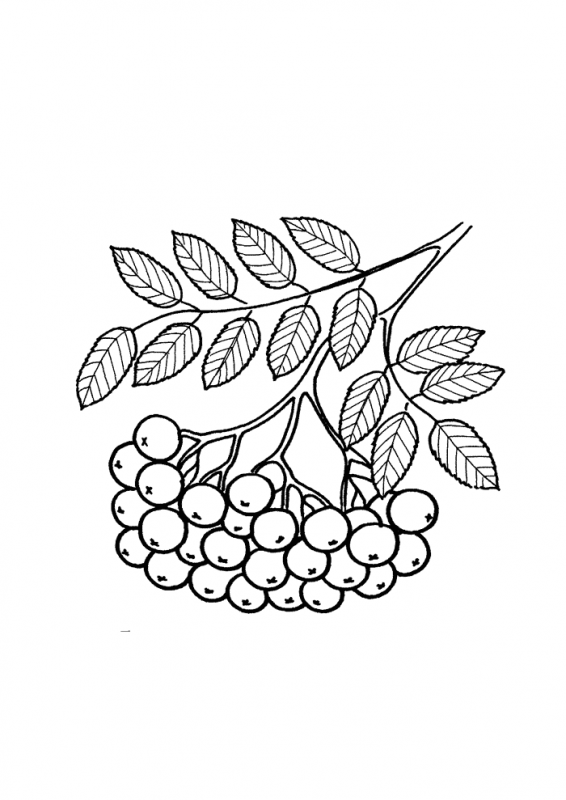 Листья для раскраски малышам