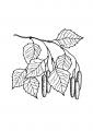 Раскраска листья
